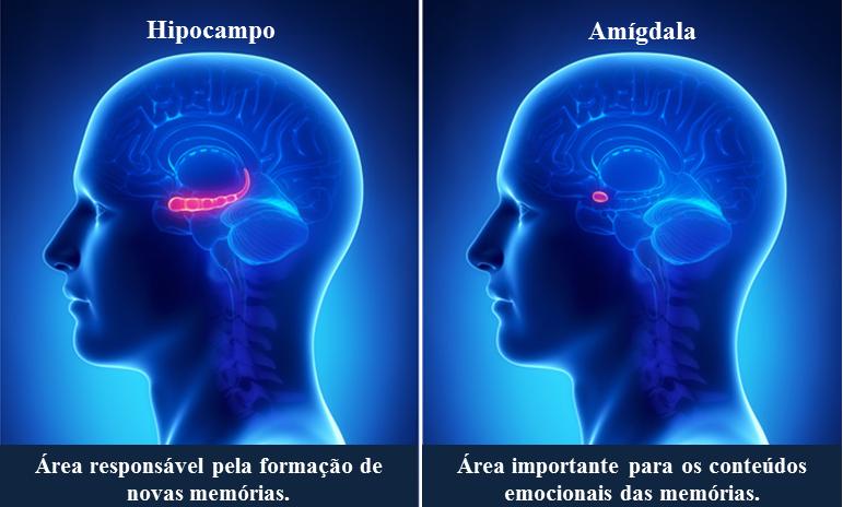 inteligencia-cerebro-amigadala-hipocampo