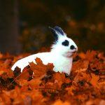 guia-da-alma-maio-numerologia-coelho-outono