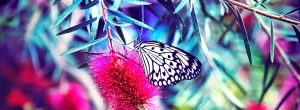 guia-da-alma-dezembro-numerologia-borboleta (3)