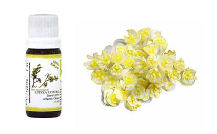 guia-da-alma-harmonie-aromaterapia--litsea-cubeba-sindrome-panico