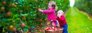 guia-da-alma-alergias-alimentares-criancas-nova-era-indigo-cristal-familia