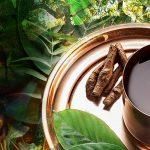 guia-da-alma-plantas-xamanicas-ayahuasca-guilherme-barcelos