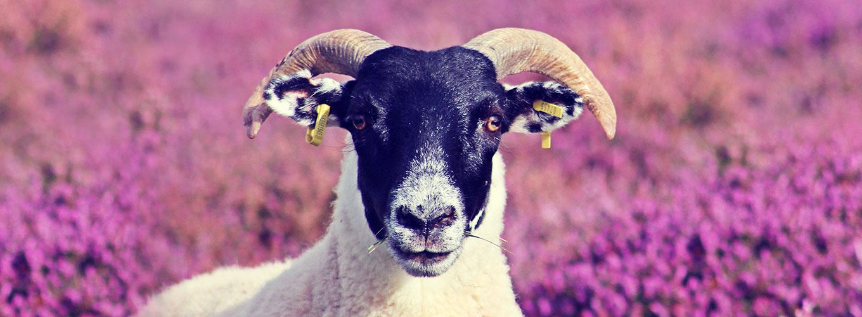 guia-da-alma-numerologia-outubro-carneiro