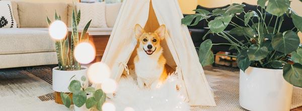 Imagem de cão feliz em sala com plantas e luz