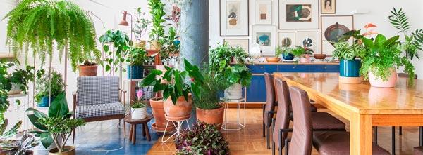 Imagem de casa cheia de plantas em ambiente iluminado