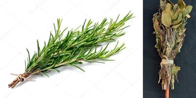 Vassoura de ervas com alecrim para limpeza energética de ambientes