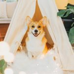 Cão sorrindo em sala com plantas para Limpeza energética de ambientes