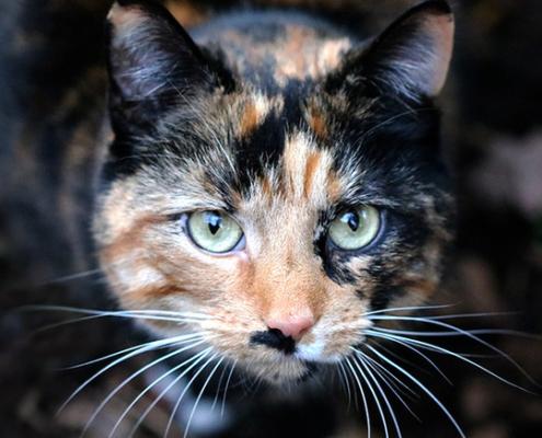 animal de poder gato - numerologia de julho número 7