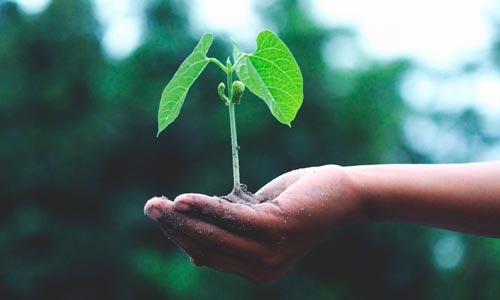 vida sustentável - compostagem
