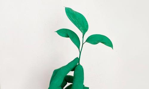 mão verde com planta