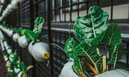 Upcycling - plantas em garrafas pet