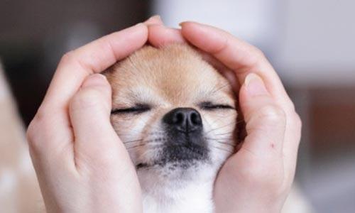 MTVSS em animais: foto com cachorro