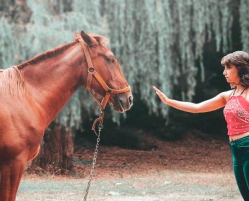menina em constelação com cavalos