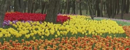Floral para a Abundãncia