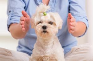 Reiki para Iniciantes: reiki em pets