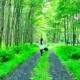 caminhos e modalidades de Yoga: mulher praticando em floresta